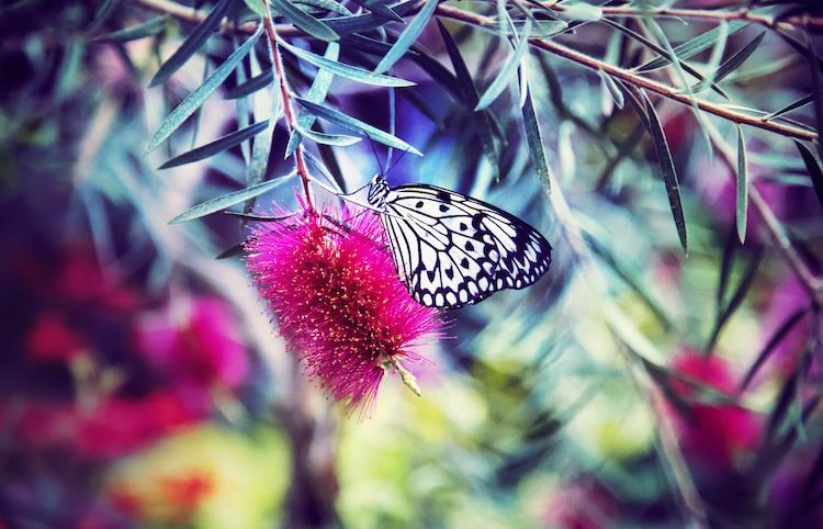 butterfly-ytt